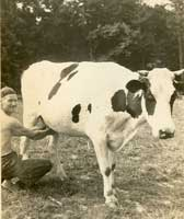Frank Selby & cow